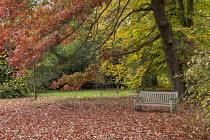 Wooden bench under Quercus coccinea and Fagus orientalis