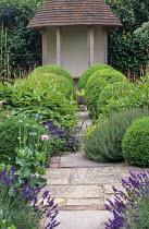 View to summerhouse, box balls, Persicaria amplexicaulis, lavender