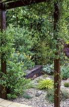 Pergola with passiflora and Trachelospermum jasminoides, railway sleeper raised bed, pebbles, Hakonechloa macra 'Aureola'