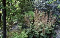 Heuchera 'Chocolate Ruffles', slate mulch, ferns, Cornus alba 'Elegantissima'