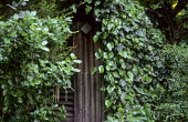 Ivy climbing over shed, aucuba, acanthus, mirror