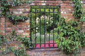 Espaliered apple and peach trees trained on brick wall, window in wall