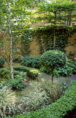 Pleached limes against brick wall, birch tree, box topiary