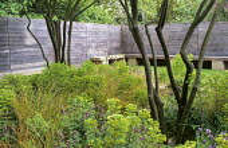 York stone benches, wooden fence, coppiced multi-stemmed Amelanchier lamarckii, Euphorbia x martini, Geranium phaeum