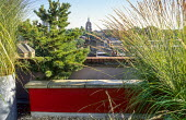 Roof terrace, galvanized planters, red painted wall, conifers used as windbreak