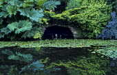 View across pond, Nuphar lutea, Gunnera manicata, ornament in grotto