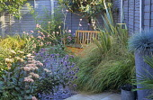 Small town garden with natural, perennial planting, painted larch lap fence, wooden bench, Verbena bonariensis, hylotelephium syn. sedum, echinops, slate chippings, festuca in container