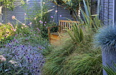 Small town garden with natural, perennial planting, grey painted larch lap fence, wooden bench, Verbena bonariensis, echinops, slate chippings