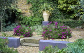 Low purple painted wall, astelia in container on plinth, osteospermum, ivy climbing over wall