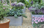 Roof garden with perennials, herbs and vegetables in metal containers, dianthus, nepeta, pelargonium, salvia, artichokes, trained fruit espaliers