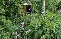 Summerhouse, Hesperis matronalis, digitalis, aquilegia