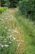 Mown grass path cut through meadow, wooden gate, hedgerow, achillea