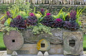 Stone trough, mill stones, red and white ornamental cabbages, variegated ivy
