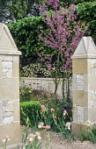 Stone piers by enclosed garden entrance, irises, Cercis siliquastrum