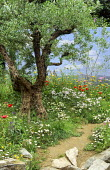 Olive tree, poppies, wildflowers, trompe-l'oeil mural