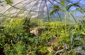 Biodome containing plants from tropical rainforests, waterfall
