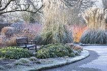 Cornus sanguinea 'Midwinter Fire', Cortaderia selloana, epimedium foliage, bench overlooking frozen pond