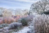Cornus sanguinea 'Midwinter Fire' in winter garden, Cortaderia selloana, Euphorbia characias subsp. wulfenii, Miscanthus sinensis 'Ferner Osten', Magnolia x soulangeana
