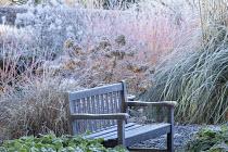 Wooden bench, hydrangea seedheads, Cornus sanguinea 'Midwinter Fire', Cortaderia selloana