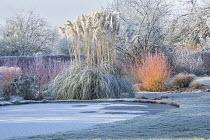 View across frost on lawn and frozen pond, Cornus sanguinea 'Midwinter Fire', Cortaderia selloana, Euphorbia characias subsp. wulfenii