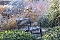 Wooden bench, hydrangea seedheads, Cornus sanguinea 'Midwinter Fire', Cortaderia selloana, epimedium foliage