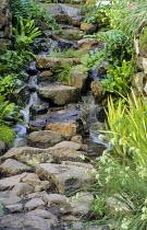 Cascade, ferns, Polygonatum x hybridum, asplenium