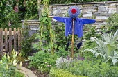 Scarecrow in kitchen garden, beans on wigwam, dry-stone wall