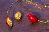 Rosehips with seeds