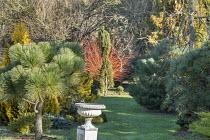 Pinus montezumae 'Sheffield Park', urn, Pinus nigra 'Komet'