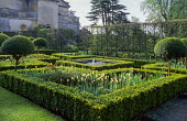 Tulips in clipped box parterre, formal raised pond and fountain