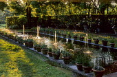 Row of fountains in formal pond