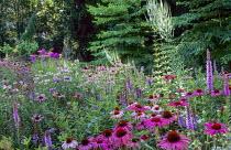 North American prairie, Echinacea purpurea 'Rubinstern', Veronicastrum virginicum, Liatris spicata