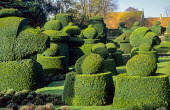 Yew topiary chess pieces