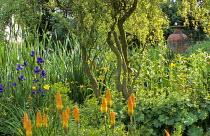 Bog garden, willow, iris, kniphofia, Alchemilla mollis, amphora
