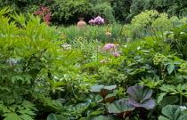 Bog garden, irises, Thalictrum aquilegifolium, angelica, ligularia, rheum, terracotta urn focal point
