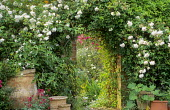 Arch with Rosa 'Madame Alfred Carrière', terracotta containers