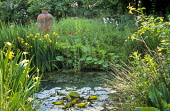 Waterlilies in natural pond, Iris pseudacorus, amphora