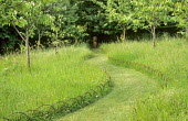 Grass path mown through long grass in cherry orchard, hooped metal edging