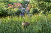 Rushes, terracotta container, clipped ligustrum, Rosa 'Buff Beauty', Rosa x odorata 'Mutabilis', view to arch and urn