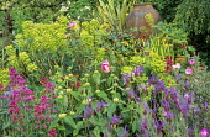 Phlomis russeliana, French lavender, roses, phormium, olive jar, euphorbia, Centranthus ruber