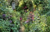 Shady path, flint stone wall with shell mosaic concealing shed, alliums, gladioli, roses, lunaria