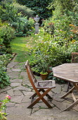 Town garden, lawn with stone urn, spiral box topiary, cosmos, table and chairs on stone patio
