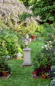 View along grass path towards stone urn on plinth, ceanothus