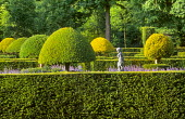 View across topiary garden, yew hedges, cupid statue, nepeta