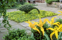 Topiary goose of Ilex crenata in square bed with Hedera helix 'Amberwaves', Tulipa 'Moonshine'