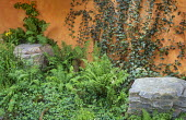 Ferns, ivy climbing on orange painted wall