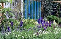 Lupins, Geranium phaeum 'Album', Nepeta 'Six Hills Giant', striped blue screen, delphiniums, rosemary