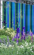 Lupins, Geranium phaeum 'Album', striped blue screen, delphiniums, Stipa gigantea, irises