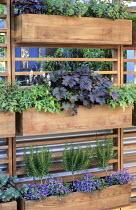 Wooden troughs with herbs, Heucherella 'Iron Butterfly', Heuchera 'Obsidian', astilbe, thyme, parsley, ivy, chives, sedum, rosemary standards