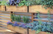 Wooden troughs with herbs, Heucherella 'Iron Butterfly', Heuchera 'Obsidian', astilbe, thyme, parsley, ivy, chives, thalictrum, sedum, rosemary standards